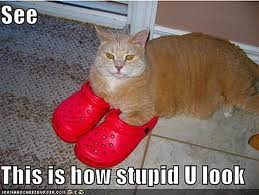 cat in crocs