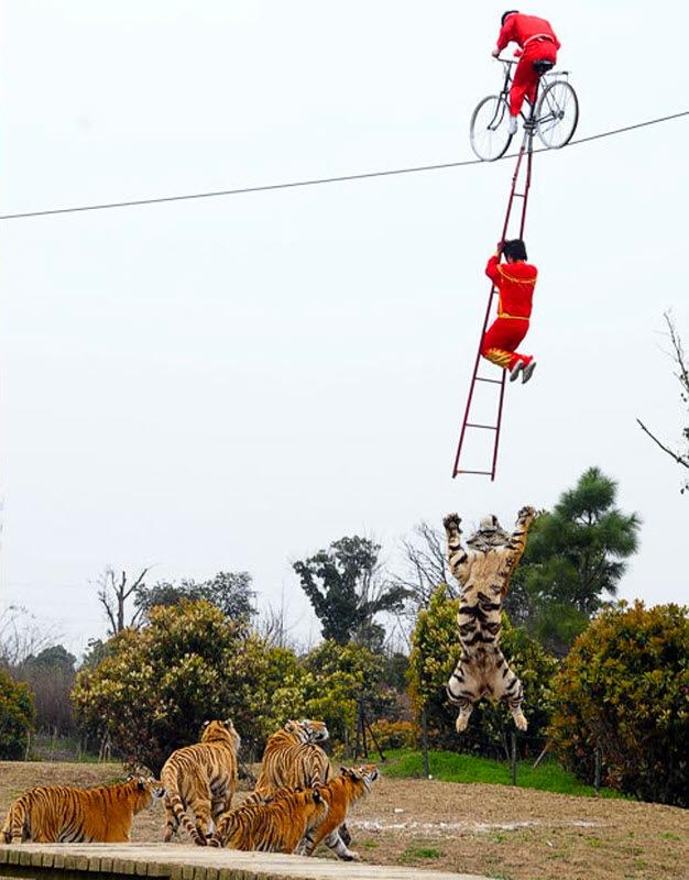 crazy tight rope