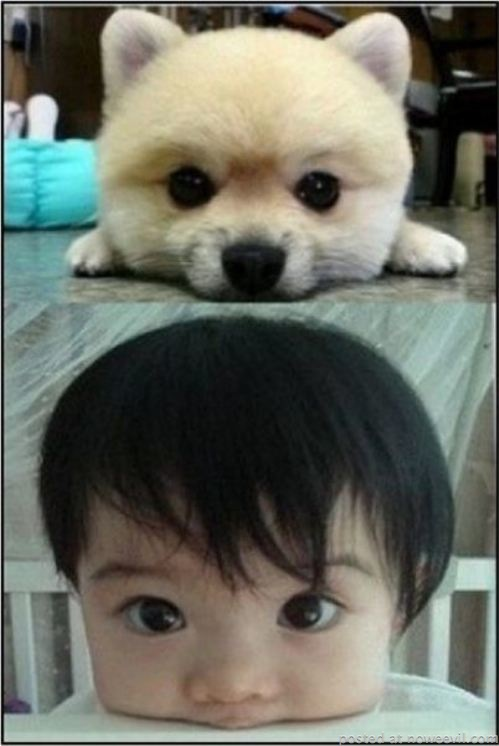 dog and kid big eyes