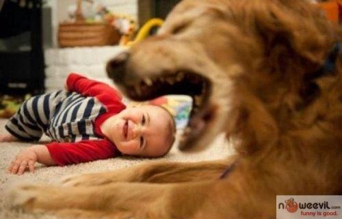 dog biting head