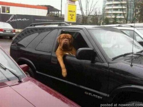 dog chilling