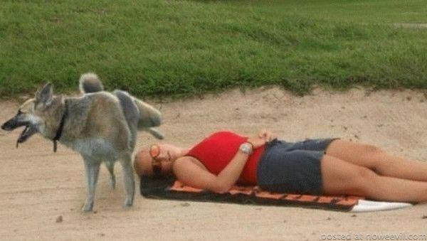 dog piing on girl