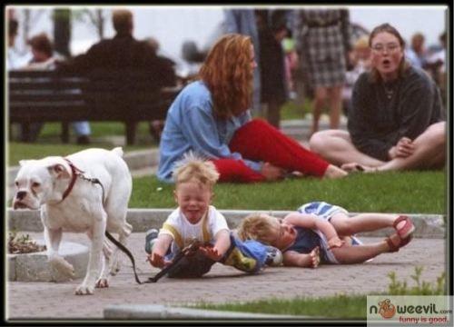 dog running away
