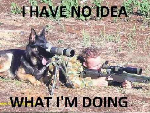 dog shooting