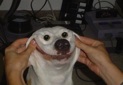 dog smile big