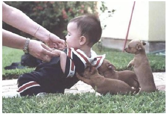 dogs helping kid up