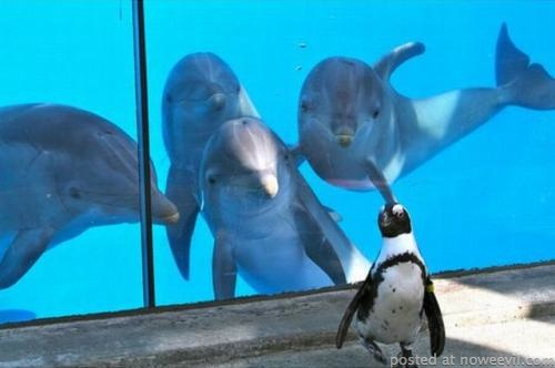 dolphins and penguin