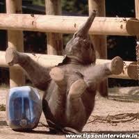 elephant laughing