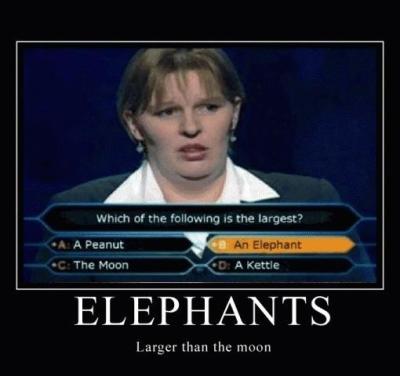 elephant milionaire question