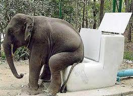elephant on toilet
