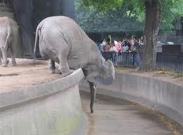 elephant reaching