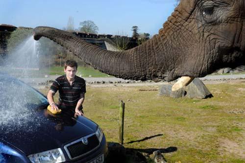 elephant washing car