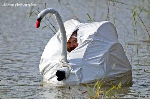 hidden photographer