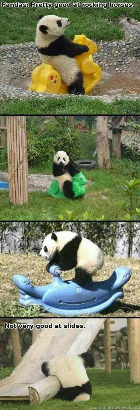 pandas and slides