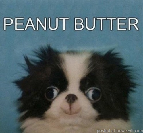 peanut butter dog