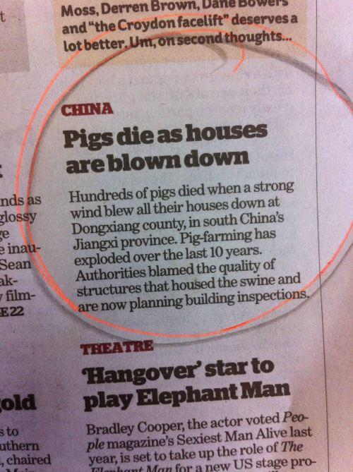 pigs die as house blown down