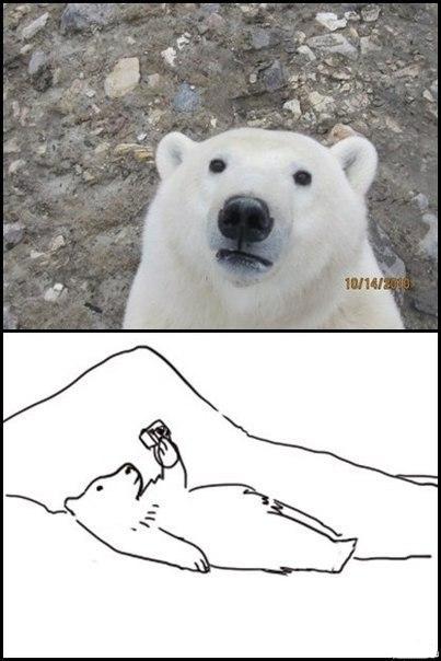 polar bear taking self portrait