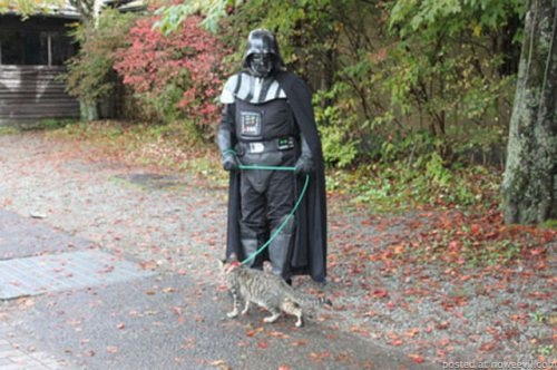 vader and cat