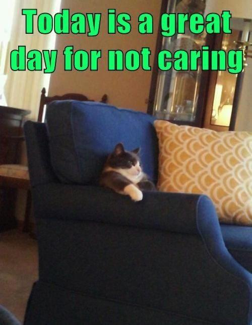 caring cat