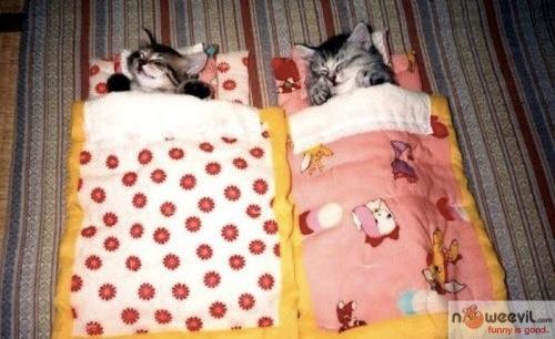 cats in sleeping bag