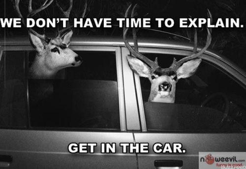 deer in car