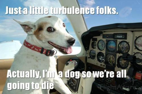 dog flying