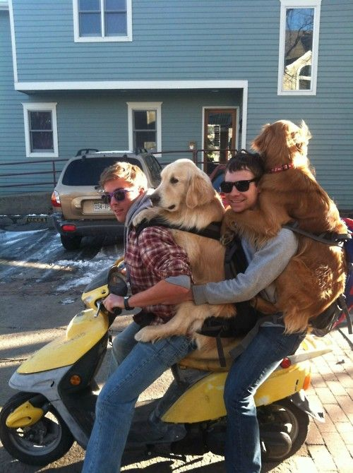 dogs scooter