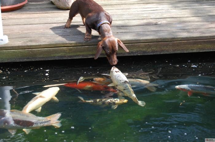 fish and dog