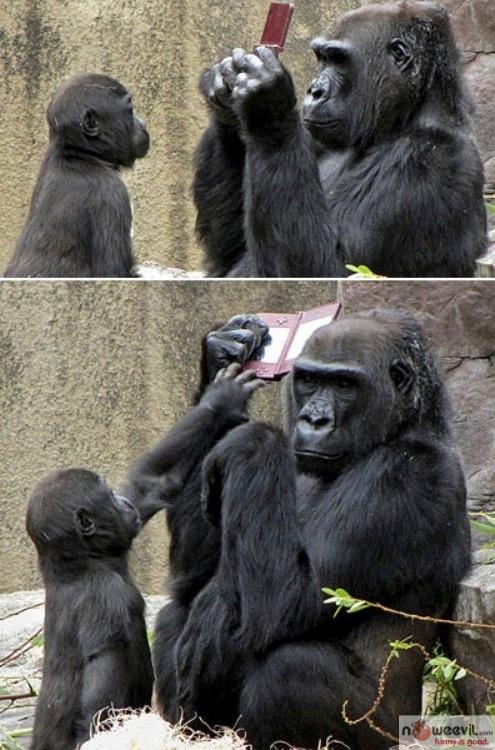 gorilla and ds