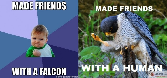 made friends with falcon