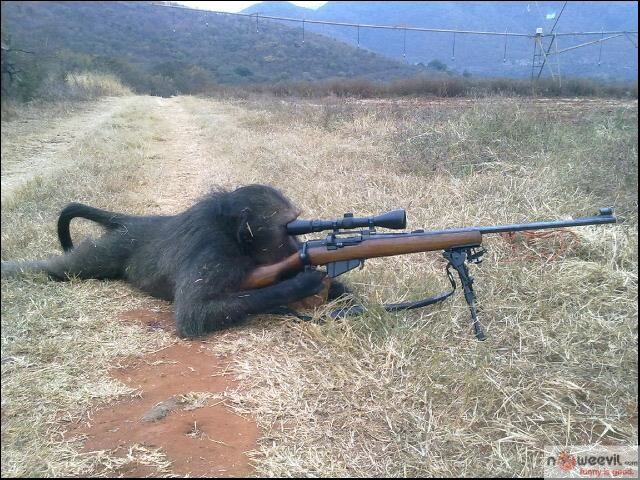 monkey and rifle