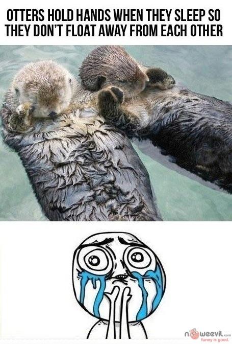 otters sleeping