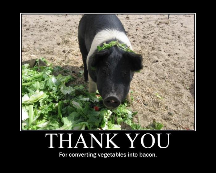 pig veggies to bacon