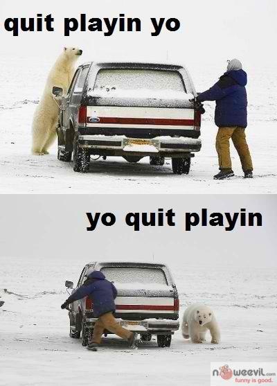 polar bear quit playing