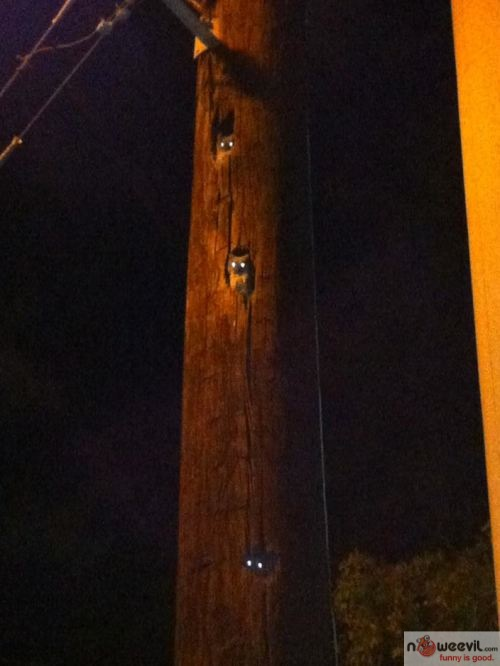 scary light pole