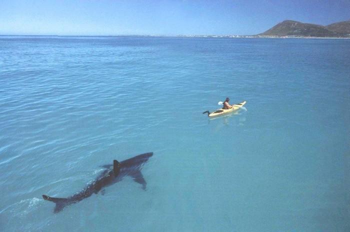 shark and kayak