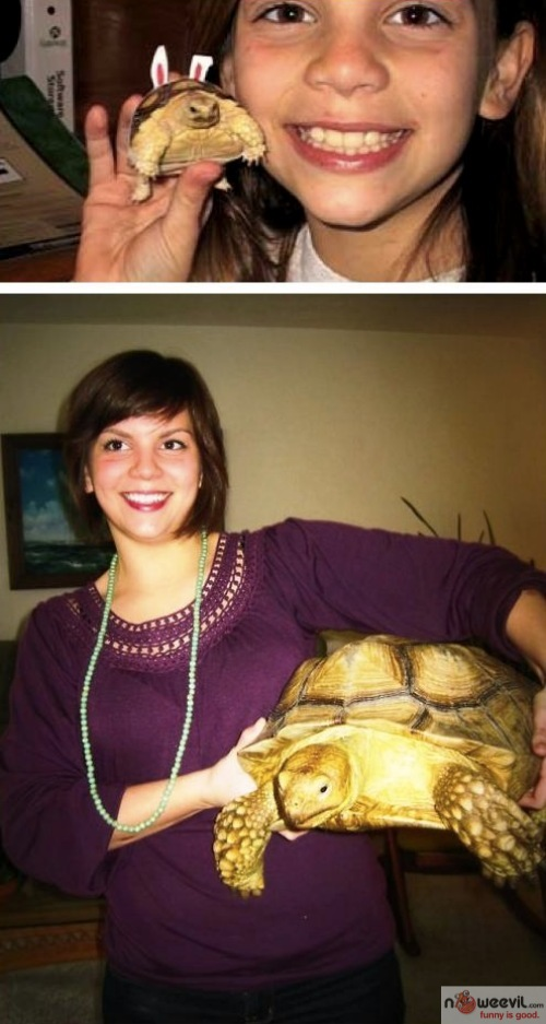 turtle over time