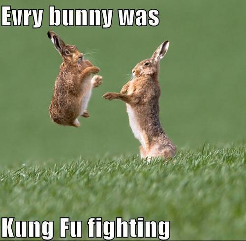 bunny kungfu