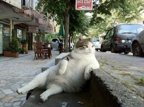 cat relaxing