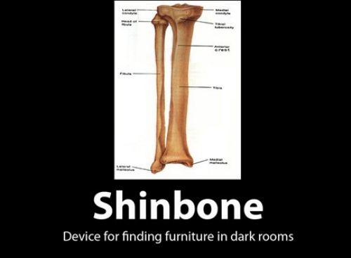 shin bone