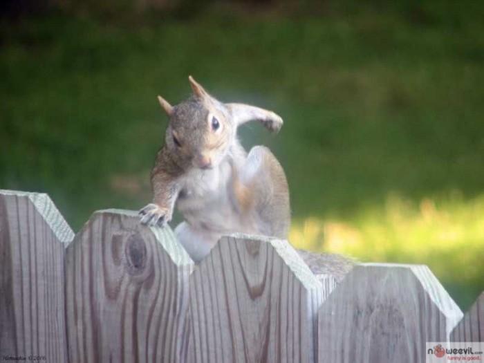 squirrell parkour