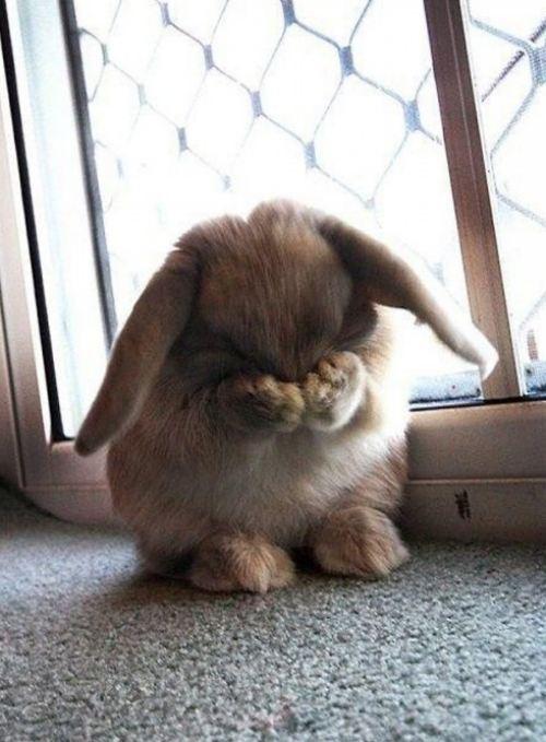 bunny hiding face