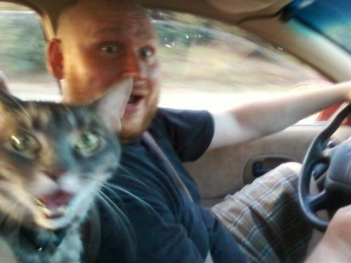 cat and driver