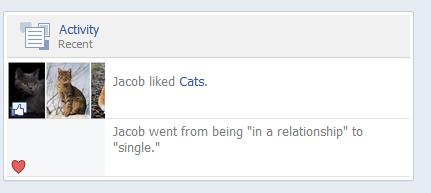 cats facebook