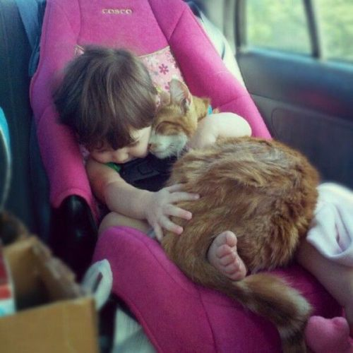 kid and cat