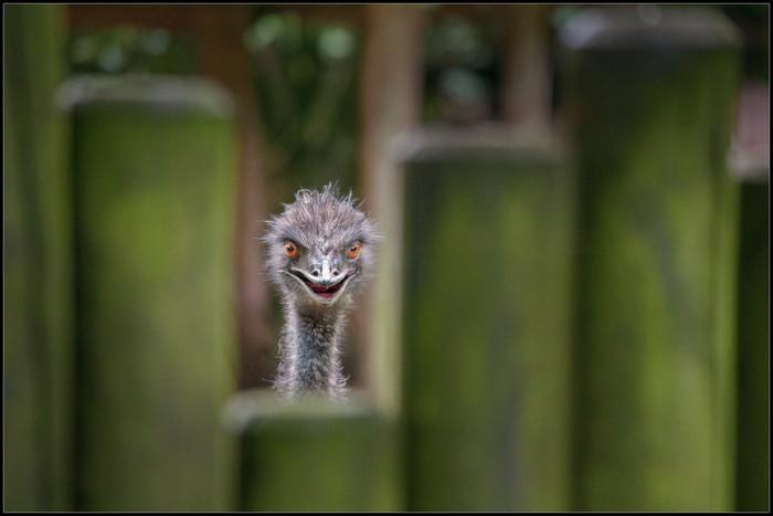 psycho bird