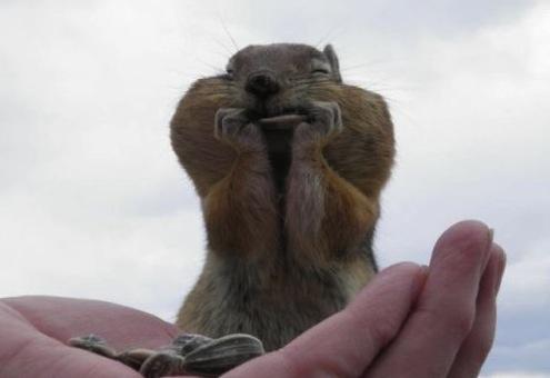 squirrel smile