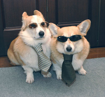 dogs and tie