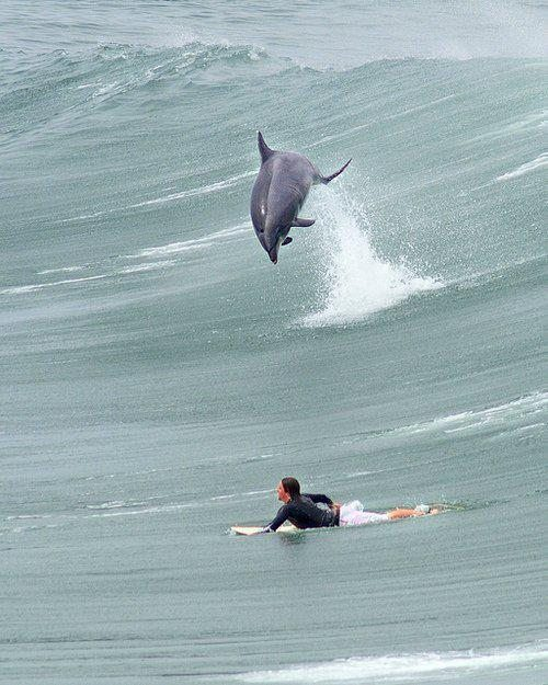 surfer dolphin